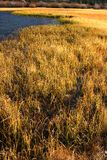 Golden Grass at Silver Lake Royalty Free Stock Photo