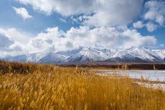 Golden grass snow mountain Stock Photos