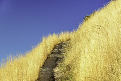 Golden grasses along a footpath in the hills Stock Photography