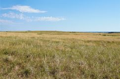 Golden grasses of a prairie Royalty Free Stock Photos