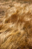 Golden Grassland Royalty Free Stock Photos
