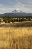 Golden Grassland Countryside Mount Adams Mountain Farmland Lands Stock Images