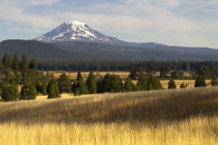 Golden Grassland Countryside Mount Adams Mountain Farmland Lands. Mt Adams looms over lush ranch land in Washington state Royalty Free Stock Photo