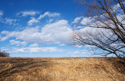 Golden Grassy Slope and Sky with Clouds in Winter Royalty Free Stock Photo
