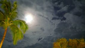 A golden green coconun palm trees swinging branches in the wind. A golden green coconut palm trees swinging branches in the wind under the cloudy night sky and stock video