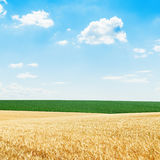 Golden and green fields under blue cloudy sky Royalty Free Stock Photo