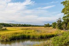 Golden Green Marsh Under Blue Skies Royalty Free Stock Images