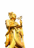 Golden Guanyin statue. Isolated on white background Royalty Free Stock Image