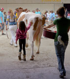 Golden Gurnsey. A a prize winning Gurnsey cow being led through the State Fair by two farm hands and a little girl Royalty Free Stock Images
