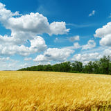 Golden harvest and clouds Royalty Free Stock Photos