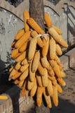 Golden harvest Royalty Free Stock Image