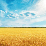 Golden harvest field with wheat and clouds Royalty Free Stock Photo