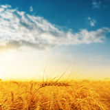 Golden harvest and sunset Stock Photography
