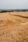 Golden Harvest Stock Images