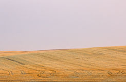 Golden Harvested Fields Lavender Skies Royalty Free Stock Photo