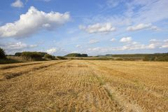 Golden harvested fields Royalty Free Stock Photo