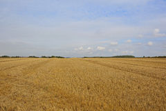 Golden harvested wheat field Stock Photo