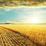 Golden harvesting field and sunset Stock Photography