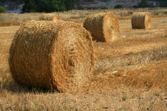 Golden hay Royalty Free Stock Image