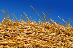 Golden Hay Against a Blue Summer Sky Stock Photos