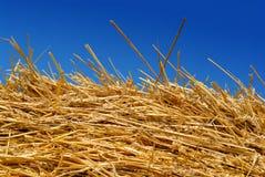 Golden Hay Against a Blue Summer Sky Stock Photos
