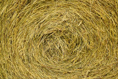 Golden hay background Royalty Free Stock Photos