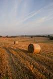 Golden hay bails stock image