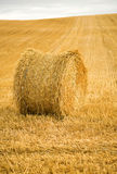 Golden hay bale. In the countryside Royalty Free Stock Photos