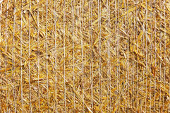 Golden hay bale close-up Stock Photo