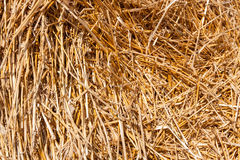 Golden hay bale collected Royalty Free Stock Image
