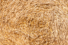 Golden hay bale collected Royalty Free Stock Photo
