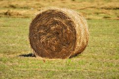 Golden hay bale on the field Royalty Free Stock Images