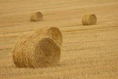 Golden hay bales stock image