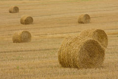 Golden hay bales Royalty Free Stock Image
