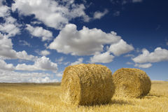 Golden Hay Bales Royalty Free Stock Images