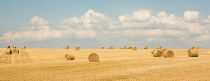Golden hay bales Royalty Free Stock Photography