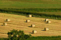Golden Hay Bales. Nine circular hay bales in a field in summer royalty free stock photos