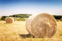 Golden hay bales at agricultural field Royalty Free Stock Photography