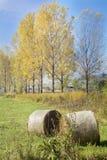 Golden Hay Bales in the autumn Stock Photo