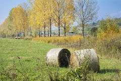 Golden Hay Bales in the autumn Royalty Free Stock Photography