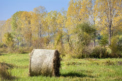 Golden Hay Bales in the autumn Stock Image