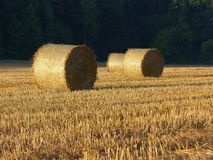 Golden Hay Bales in the countryside Stock Image