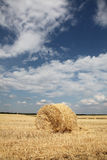 Golden hay bales in the countryside Royalty Free Stock Photo