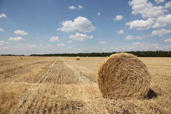 Golden hay bales in the countryside. Photo #4 Stock Photography