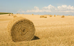 Golden hay bales in countryside Stock Image