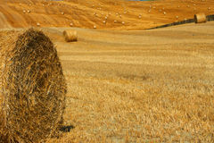 Golden Hay Bales in the countryside Royalty Free Stock Photography