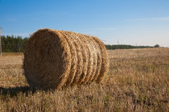 Golden hay bales in the countryside. Royalty Free Stock Photo