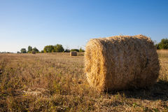 Golden hay bales in the countryside. Royalty Free Stock Photography