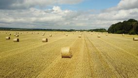 Hay Bales On The Field. Golden hay bales in the countryside stock video footage