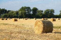 Golden hay bales on a field Royalty Free Stock Photography